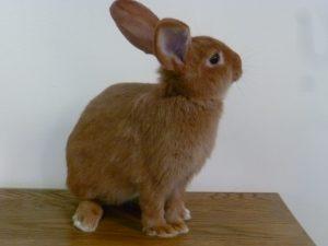 Médiation animale avec des lapins