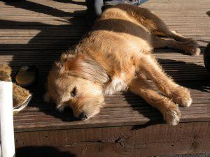 Médiation animale avec des chiens