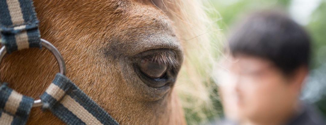 Le Bonheur dans le Pré: Centre d'équitation naturelle et de thérapie avec le cheval